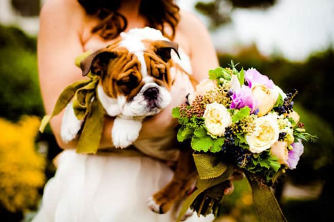 How to Include Pets in Your Wedding